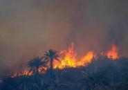 Incendio forestal Ruta Las Palmas