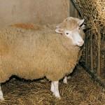 Momentos Notables: La oveja Dolly