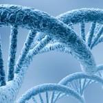 Se completa el borrador del genoma Humano