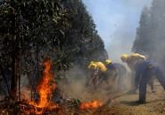 Incendio Arauco