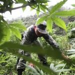 Bloque Internacional: Los debates en Colombia y México por la legalización de la marihuana