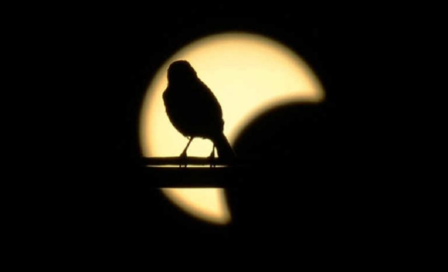 Resultado de imagen para Las curiosas reacciones de animales a los eclipses solares totales