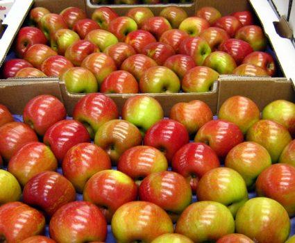 Exportación de Fruta